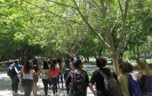 Estudiantes de espalda caminando por la arboleda de la entrada de Campus San Joaquín UC. Año 2018